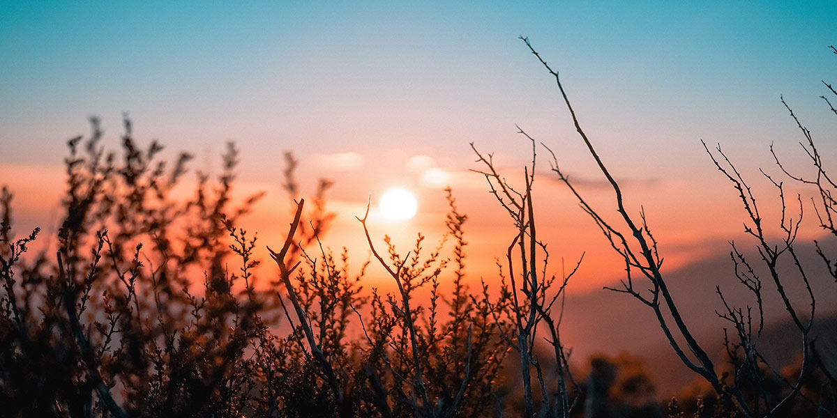 sunset visible through hedge